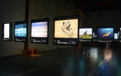 Museum Naturalis Leiden